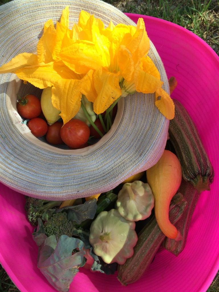 Summer squash, tomatoes and squash blossoms from New Moon farms in Boulder